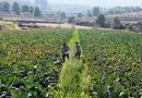 La agricultura ecológica bate un nuevo récord de facturación con 108 millones de euros más que en 2019